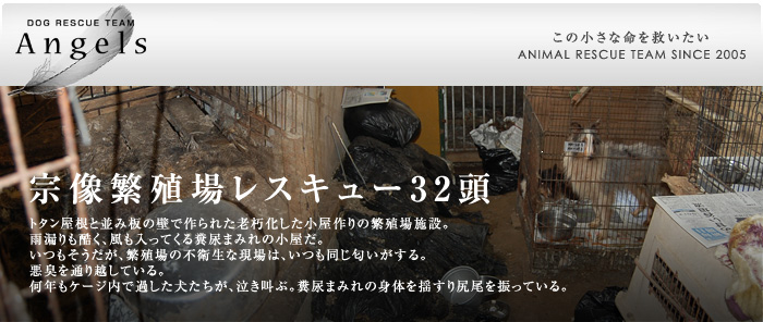 http://angels2005.org/rescue/img/title_munakata.jpg